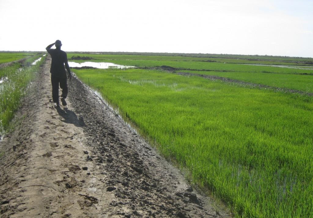 Projet de développement hydro-agricole de la vallée du Gorgol (50 000 ha)