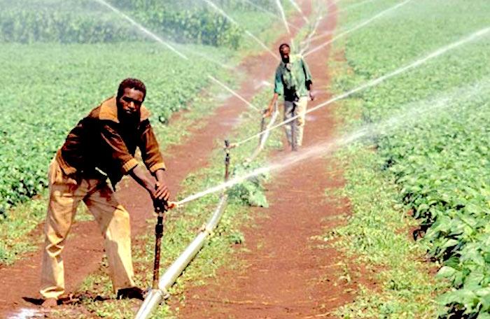 Audit des infrastructures hydro-agricoles dans le Delta et la vallée du fleuve Sénégal